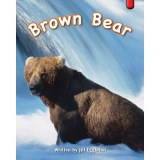 R14 - Brown Bear